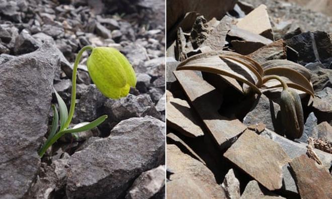 Phát hiện loài cây tiến hóa để trốn tránh con người - 1